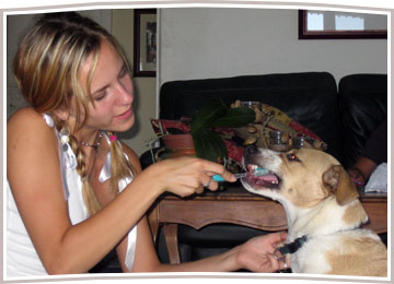 Home Dental Care for Your Dog or Cat