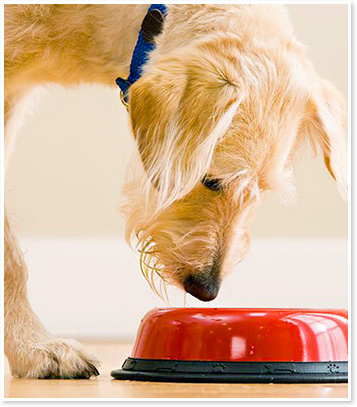 Nutrition Counseling for a Healthy and Fit Dog or Cat
